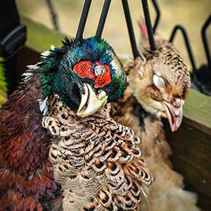 Vale-House-Kitchen-Pheasants