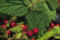 Vale-House-Kitchen-Introduction-to-Foraging-course