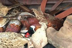 Vale-House-Kitchen-Shooting Experience Pheasants